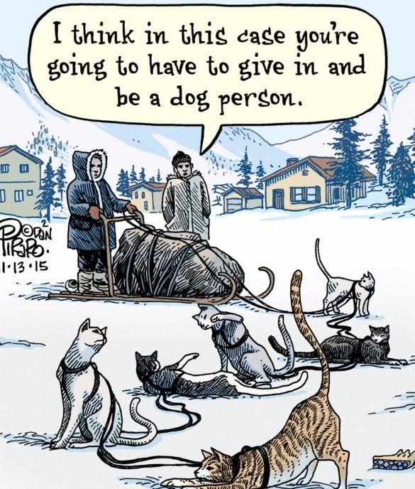 Like Herding Cats With Images Cat Jokes Bizarro Comic