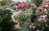 Gartenpfad durch ein Rosenbeet