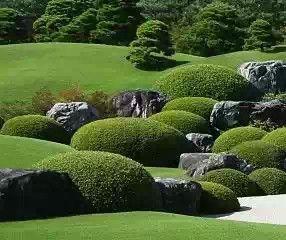 Manicured shrubs at Adachi Museum of Art