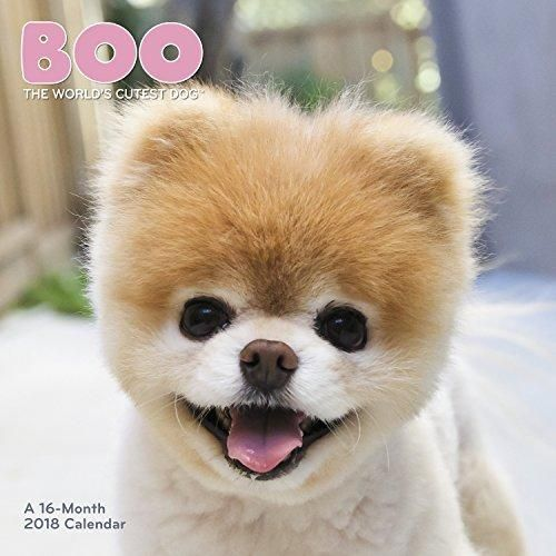 Boo The Worlds Cutest Dog Wall Calendar Paiges Boo World - 16 fluffy cute animal species world