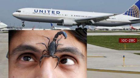 PANICĂ şi GROAZĂ la bordul unui avion. Un pasager a fost înţepat de un scorpion