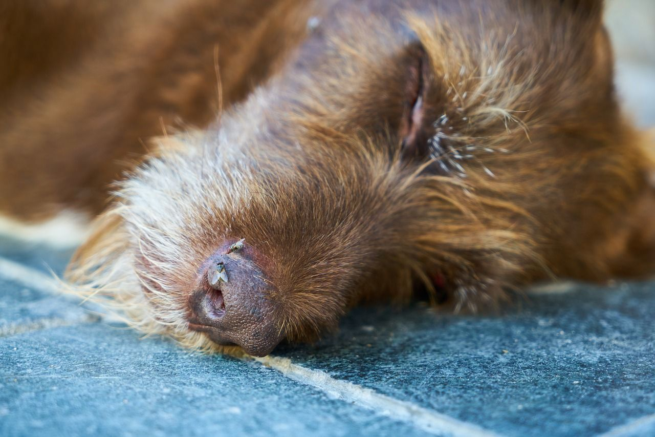 Dog Dies After Routine Walk And Now Owner Is Warning