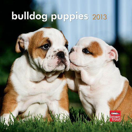 Bulldog Puppies 2013 Mini Wall Calendar Bulldog Puppies Puppies