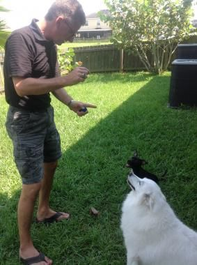 As One Of The Top Dog Training Companies Loyal Paws Specializes