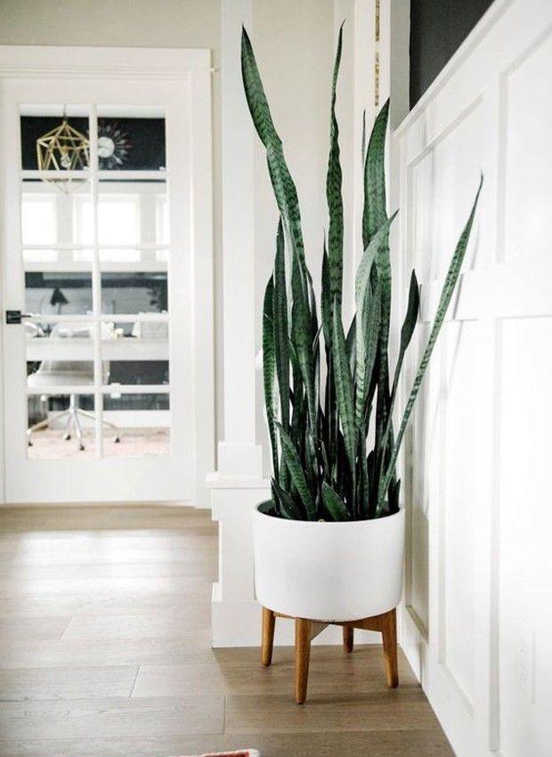 10 Deko Ideen mit Krokussen | Topfblumen, Indoor pflanzen