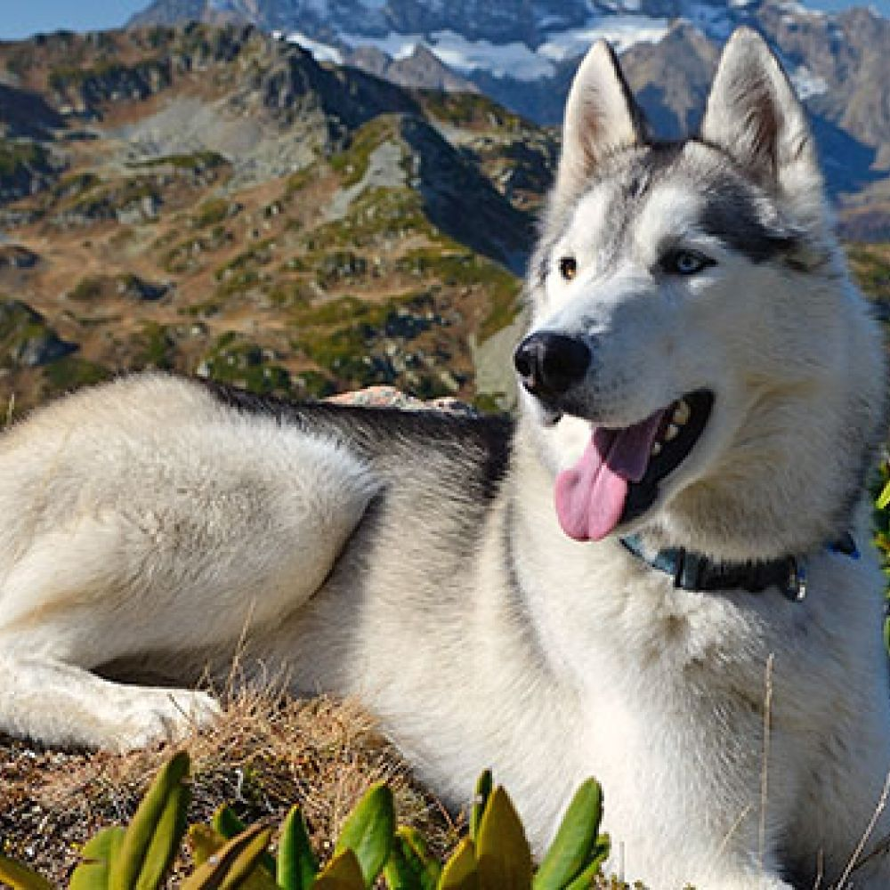 The Beginner's Guide To Hiking With Dogs Hiking dogs