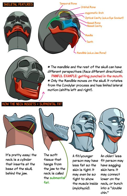 HEADS UP: Drawing the Head from a low angle by NemoNova on ...
