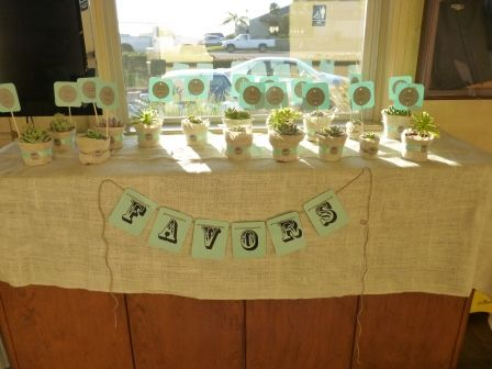 Succulent favors and place cards
