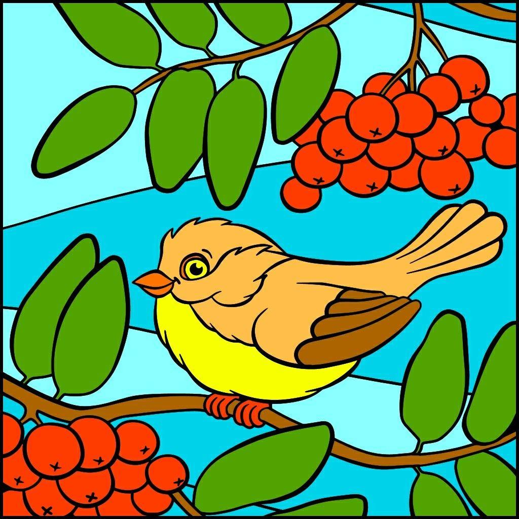 Pin by Dizzy Lizzy on All birds | Pinterest | Bird