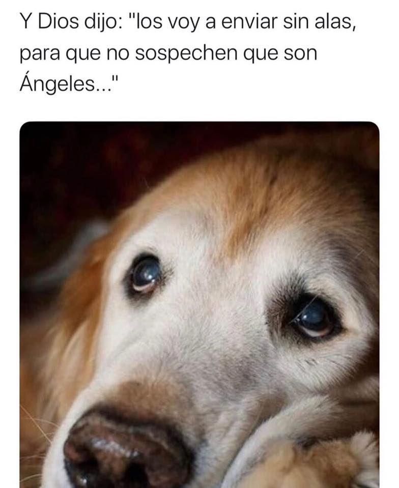 Pin De Fan De Todo En Mascotas Y Mas Perros Frases Animales Frases Amor De Perro