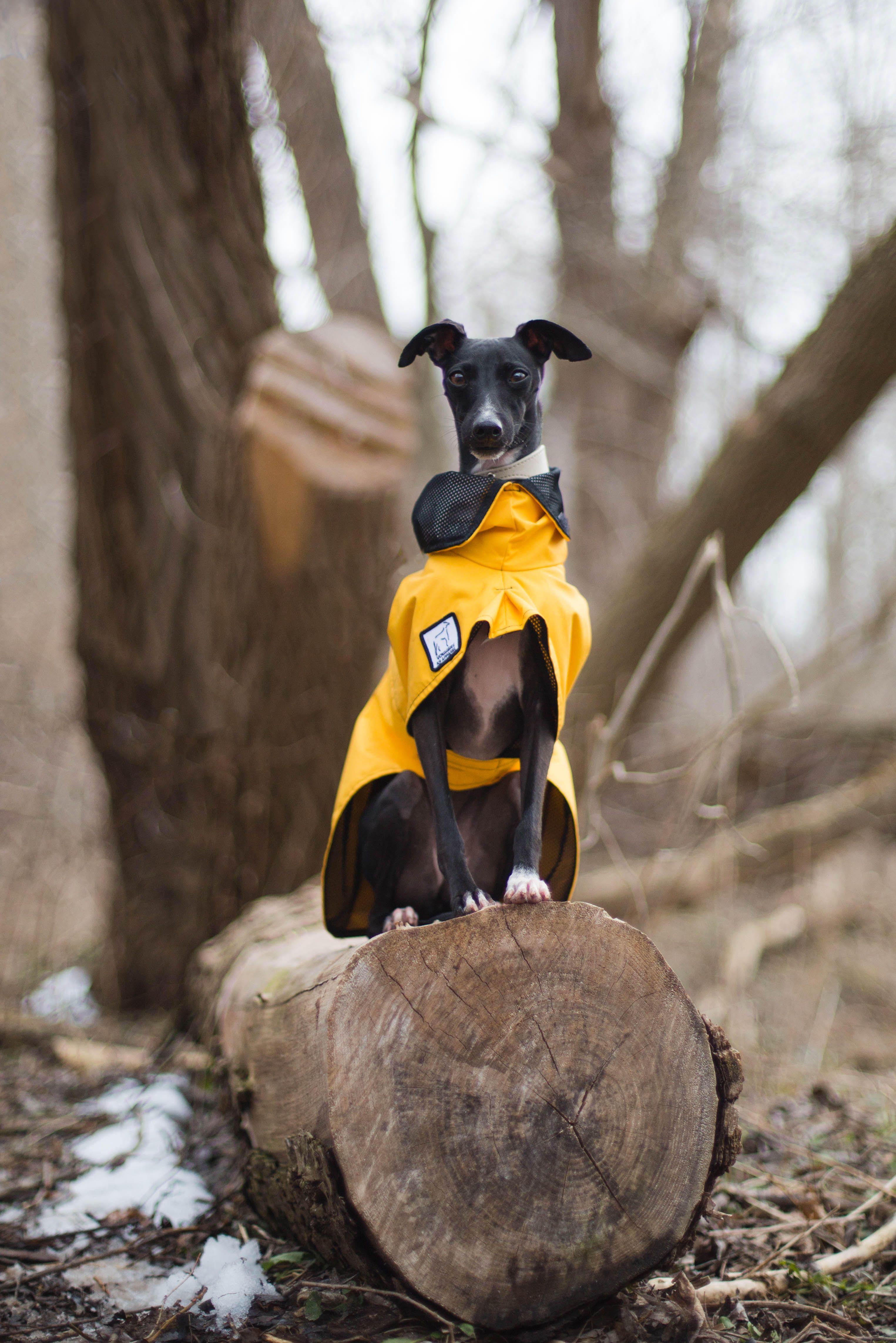 Yellow Greyhound Dog Rain Coat High Performance Waterproof Dog