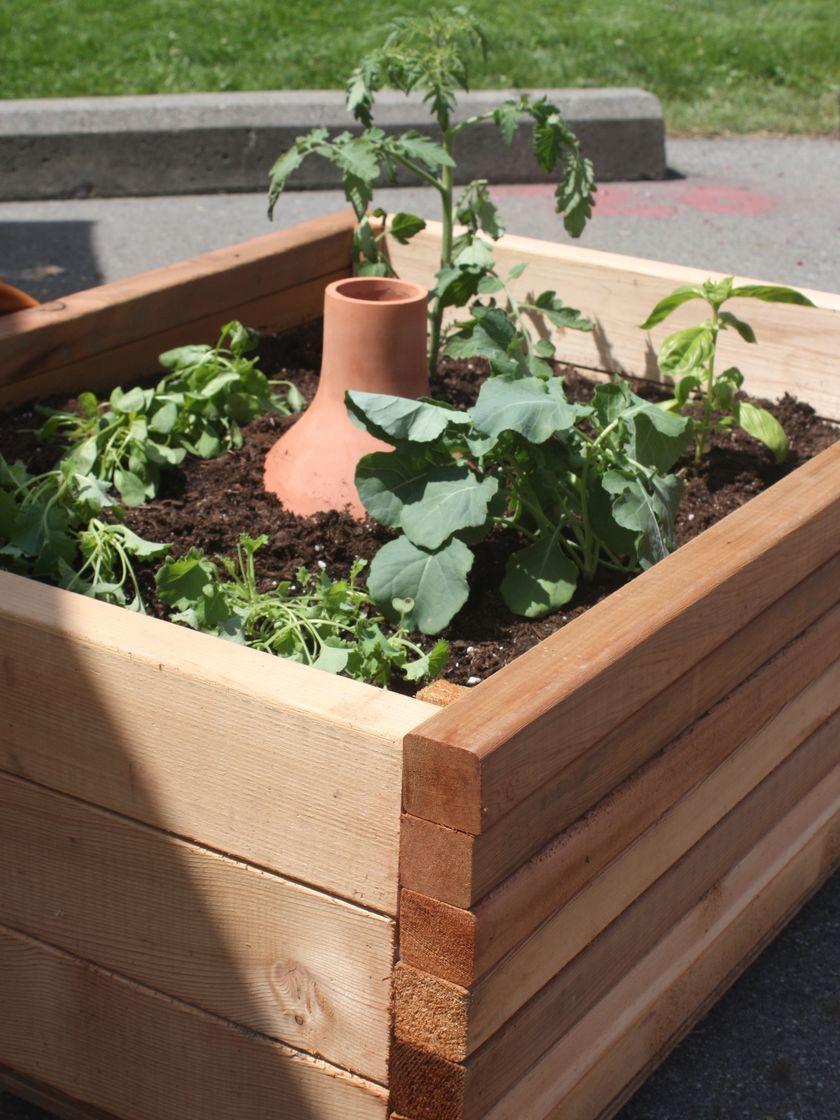 clay pot irrigation olla irrigation growoya ollas irrigation rh pinterest at