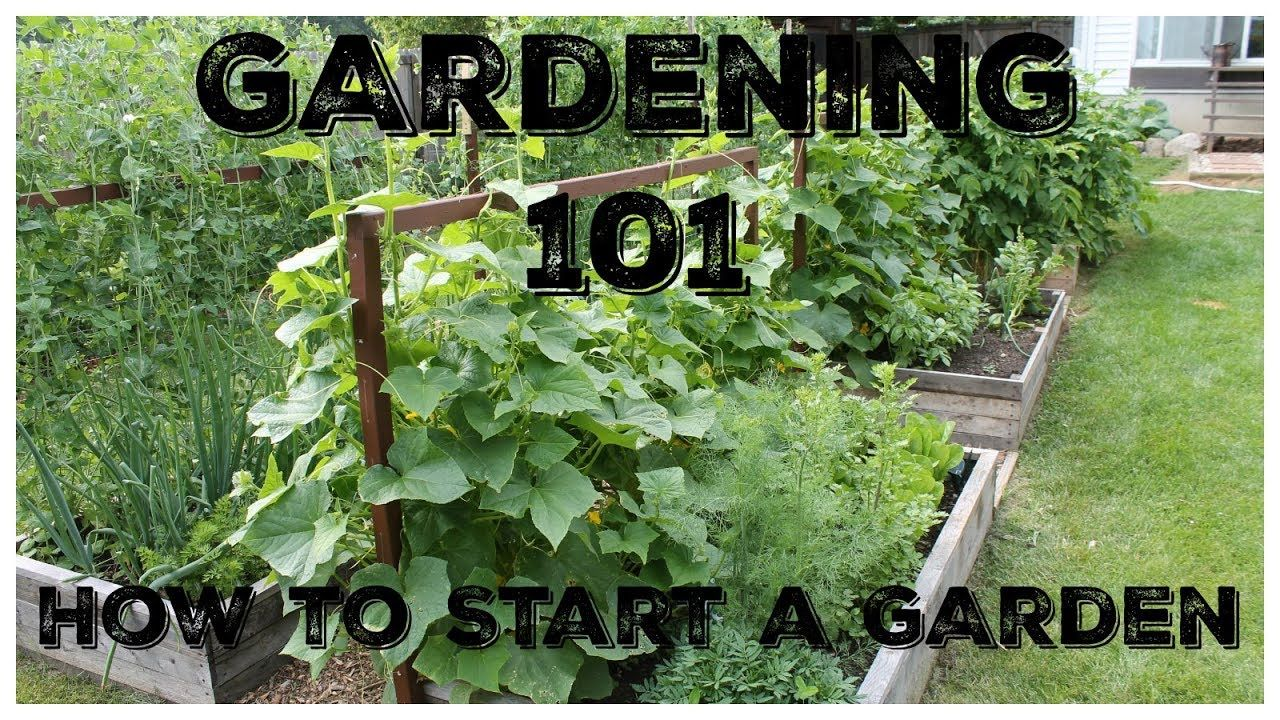 Gardening 101 How To Start A Garden This Might Come In Handy If You Want To Plant A Fall Garden Farmi In 2020 Starting A Garden Gardening 101 Easy Vegetables To Grow