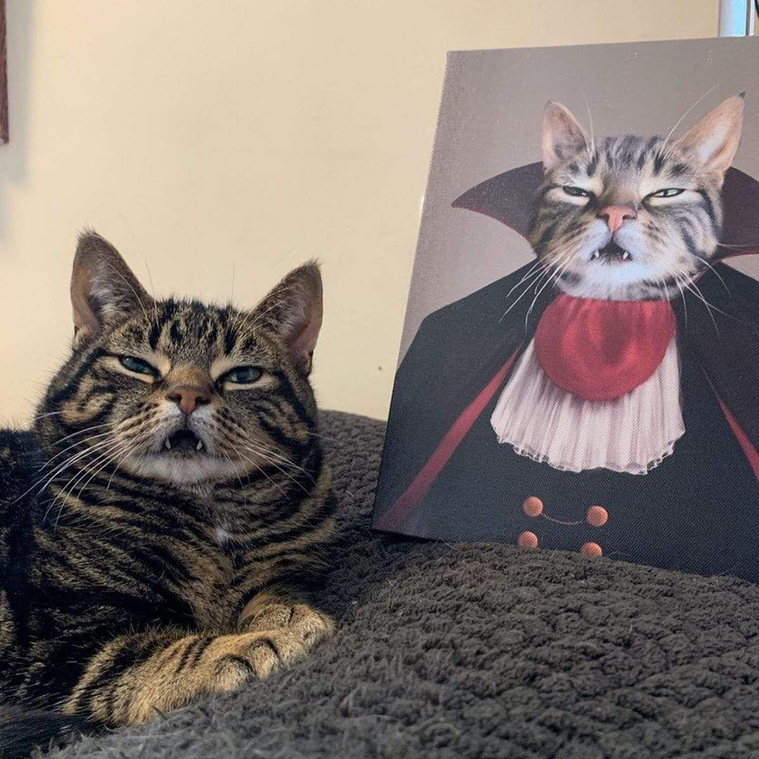 Halloween Vampire Cat This is Ted Cats Dressed Up in Costumes Home Decor Funny Art Fall Autumn Gifts for Anyone 5 x 7 Art Print