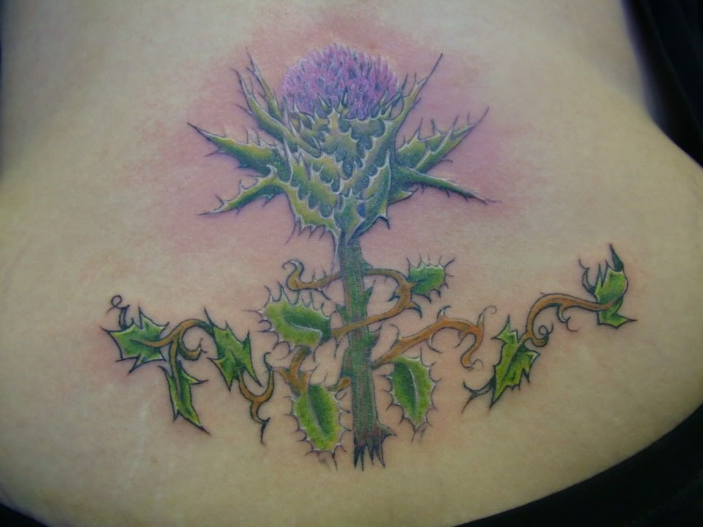 48 best thistle tattoos images on pinterest thistles scottish