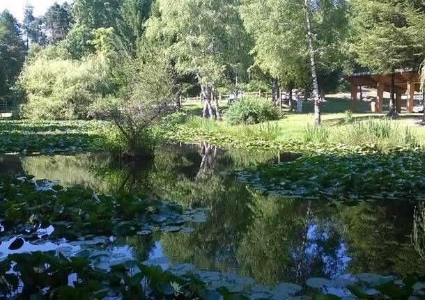 Laghetto delle ninfee luoghi vari garden plants e for Laghetto con ninfee