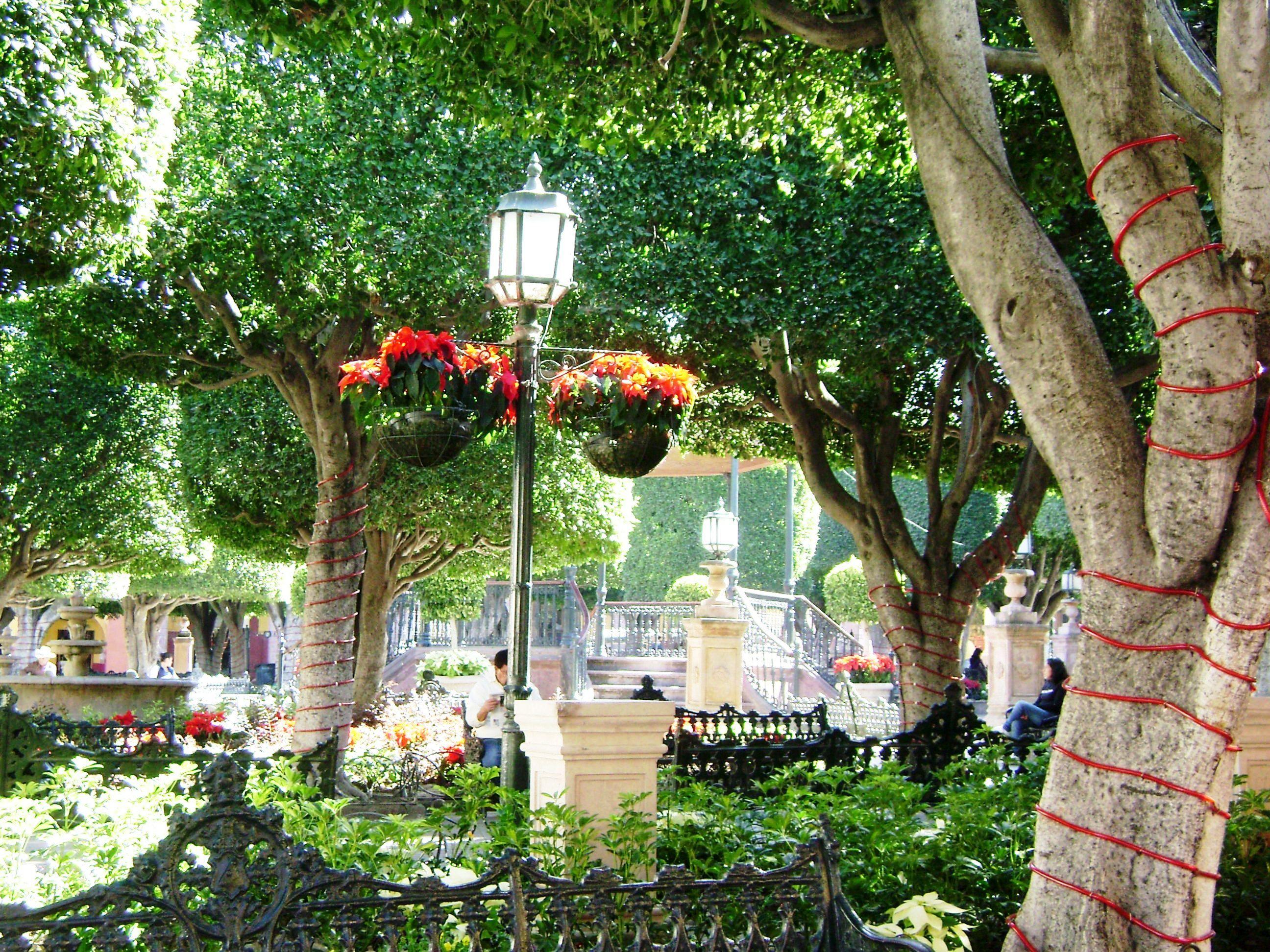 El jardin sma dec 2012 ssa san miguel de allende for Jardin san miguel de allende