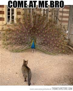 Funny Cat Fight Meme - Bing images
