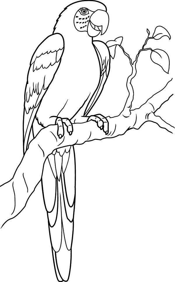 coloring page of a macaw | Parrot, Lovely Parrot Coloring ...