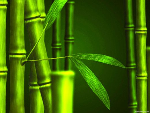 bamboo hd background powerpoint backgrounds pinterest