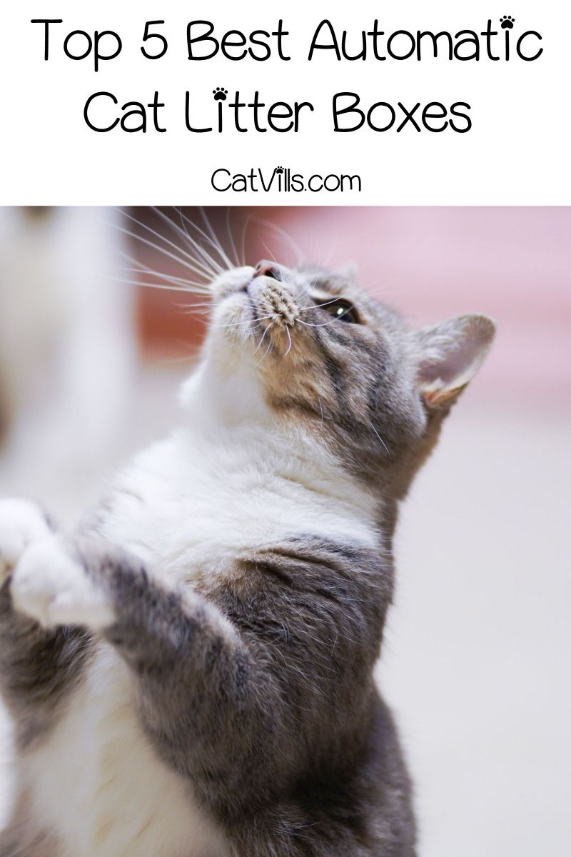 Top 5 Best Automatic Cat Litter Boxes (with InDepth