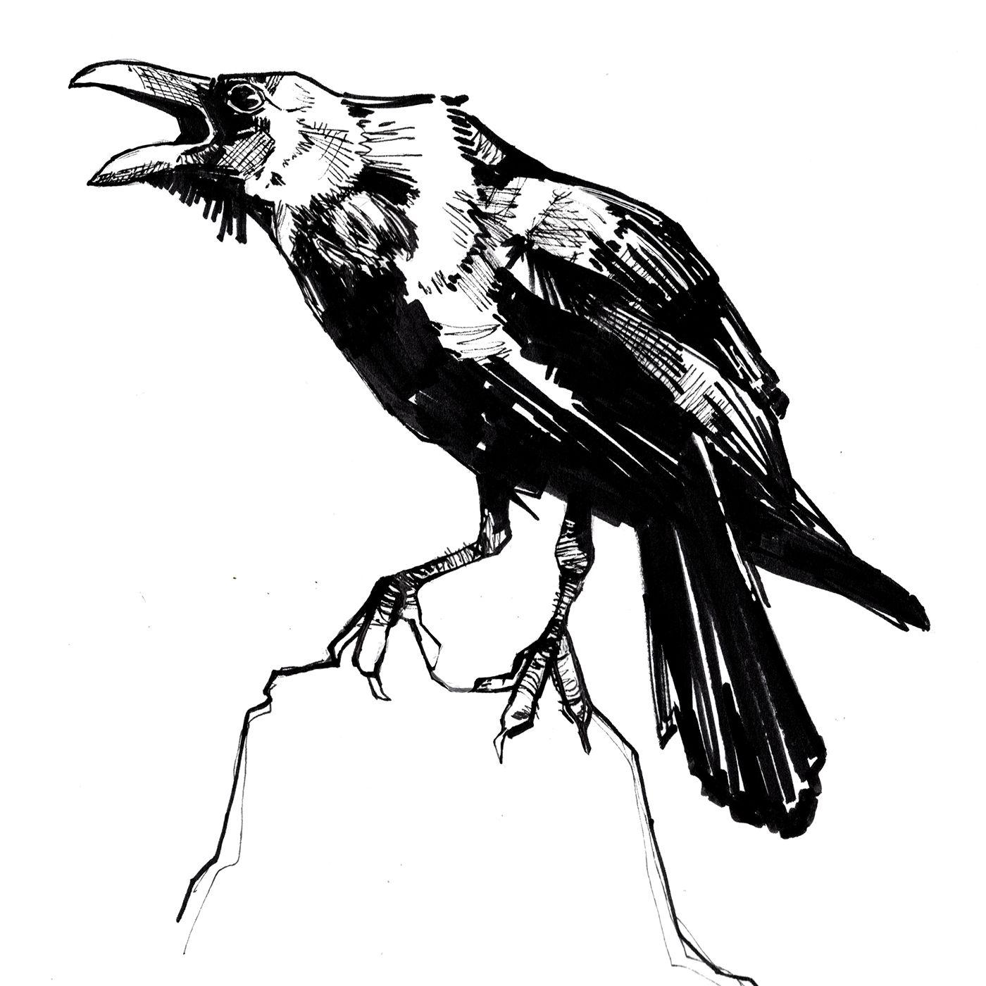 Картинки ворон нарисованные