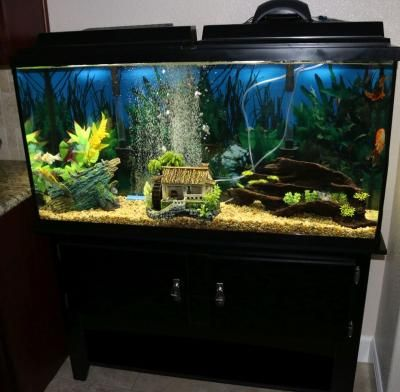 Null Cool fish tanks, Aquarium fish tank, Fish tank design