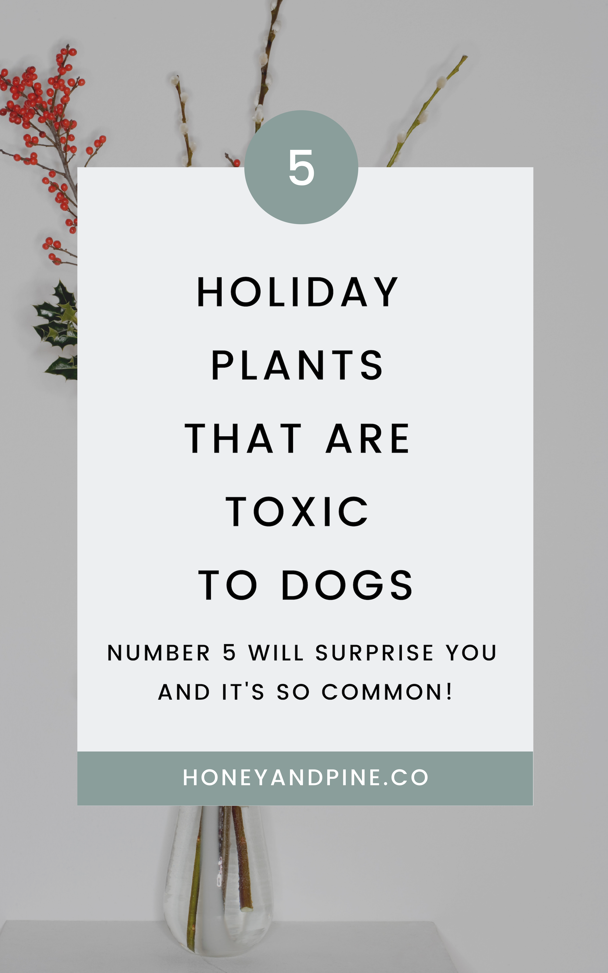 5 Holiday Plants That Are Toxic To Dogs Sick Dog Adoption Information Poinsettia Plant