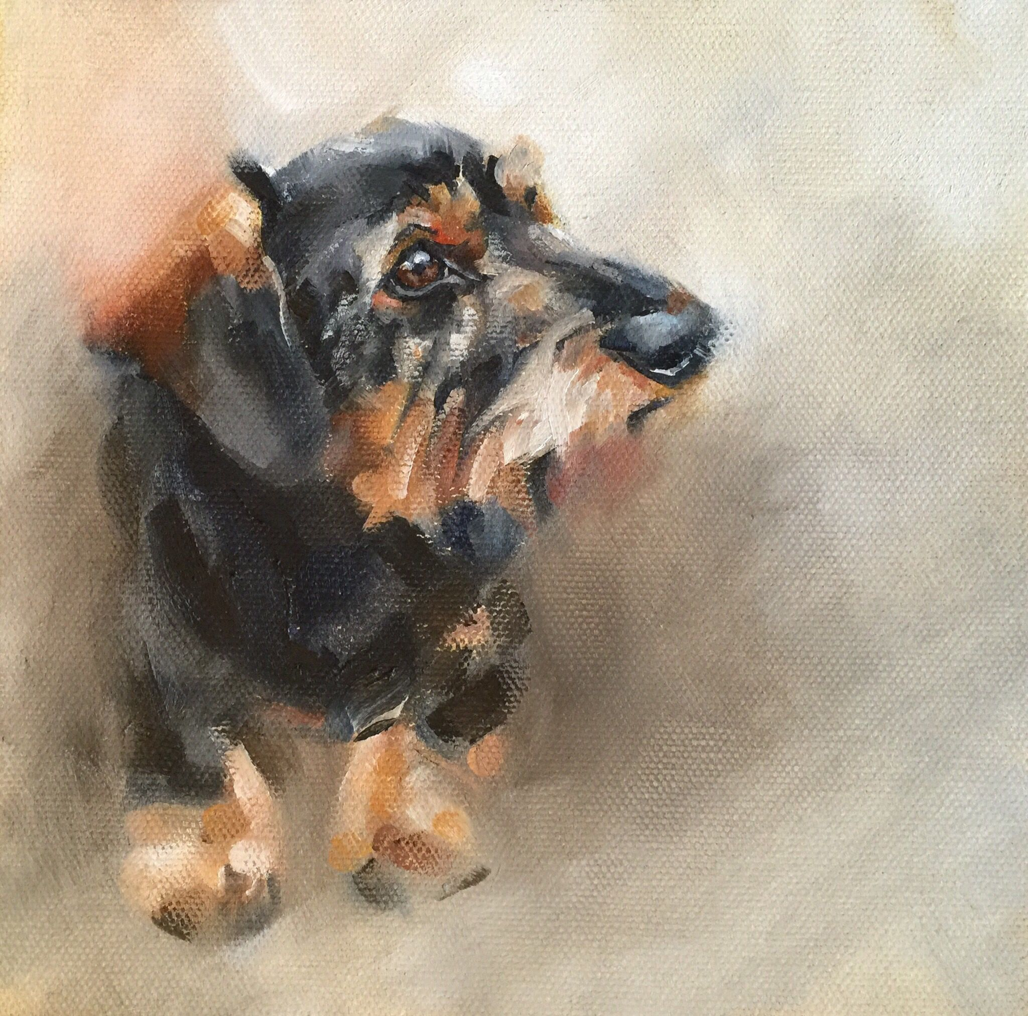 Pet portraits in oil by Julie Brunn