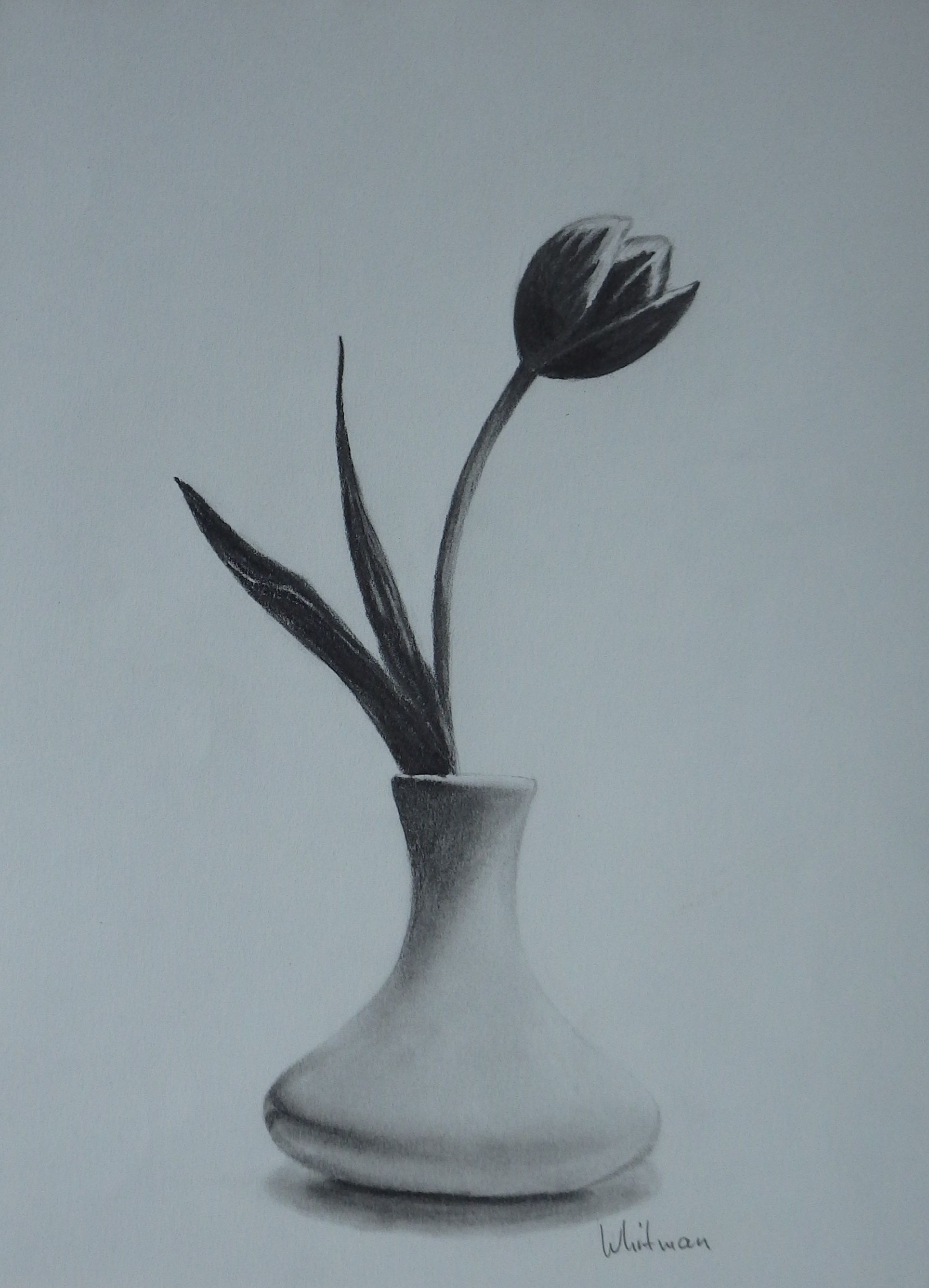 Tulip In A Vase Still Life Sketch Original Art Graphite