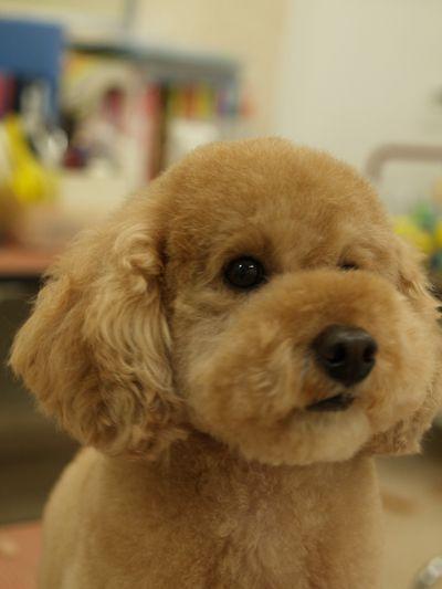 Pin On Doggie Dog