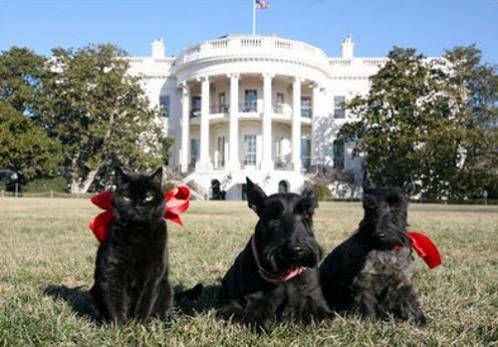 The White House Grounds Pets And People In The President S Park