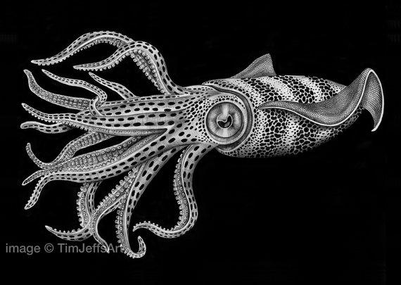 Squid Ink Drawing https://www.etsy.com/nl/listing/166914495/squid-ink-drawing?ref=listing-shop-header-0