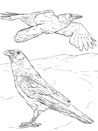 Common Raven Coloring Page Supercoloring Com Coloring Pages Coloring Book Pages Coloring Books