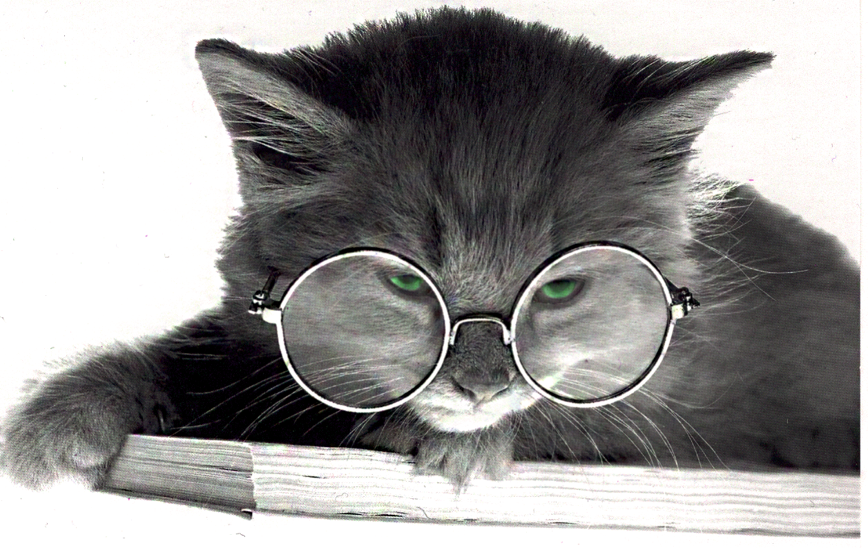 Cat With Glasses By Powerpenguin42 On Deviantart Cat Glasses Cats Curiosity Killed The Cat