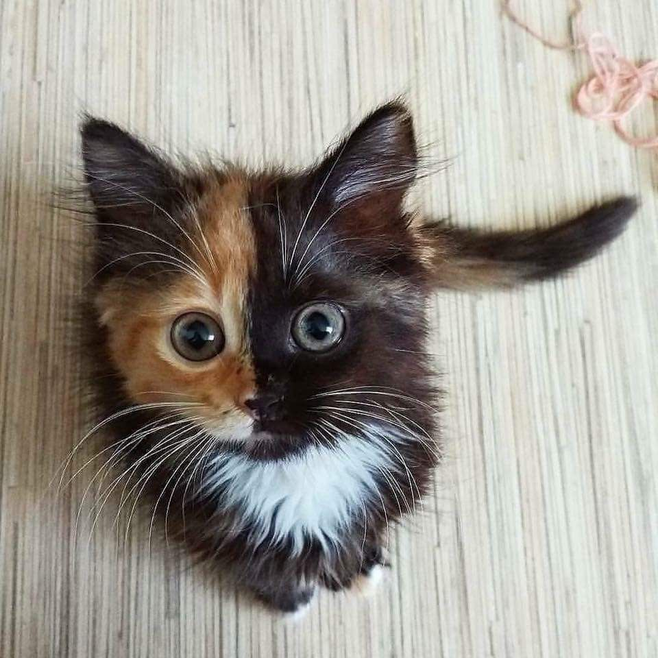 Pin By Lisa Del Valle On Loving All Creatures Big Small Kittens Cutest Cute Animals Cats And Kittens