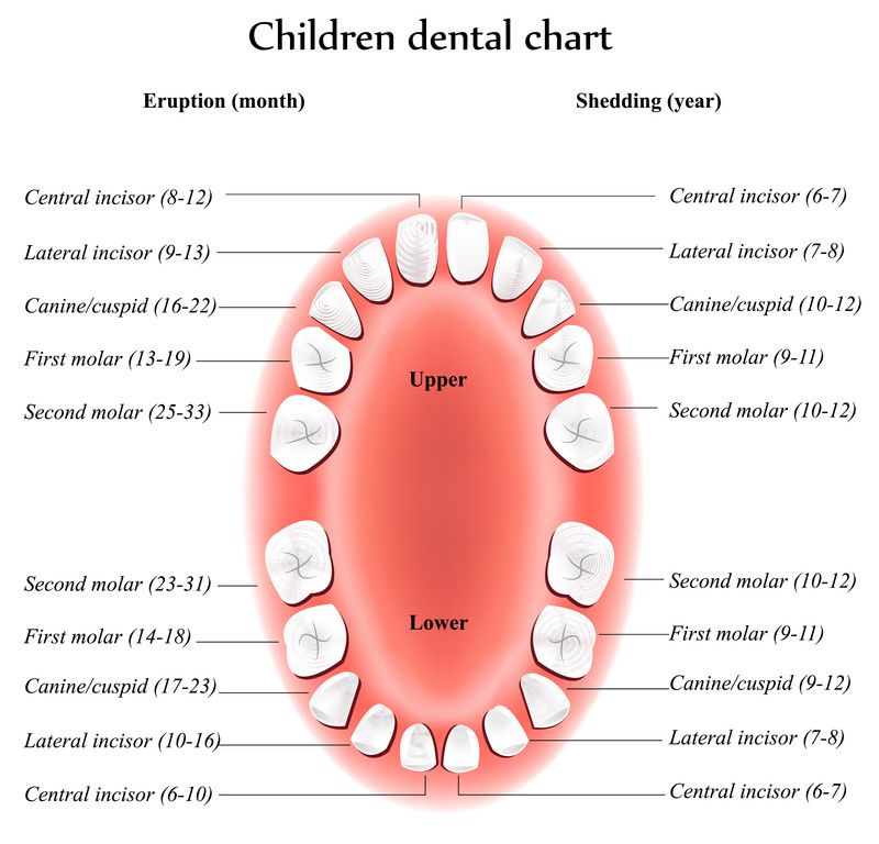 Children dental chart from your pediatric dentist locator children dental chart from your pediatric dentist locator dentists 4 kids ccuart Gallery