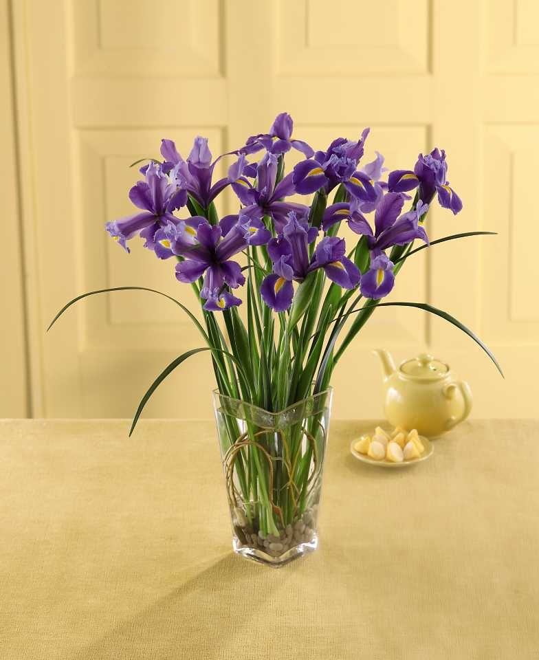 Blue Irises Don T Know Why They Re Called I Would