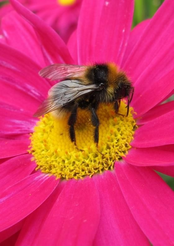 Bumble bee, bumble bee, come again soon.