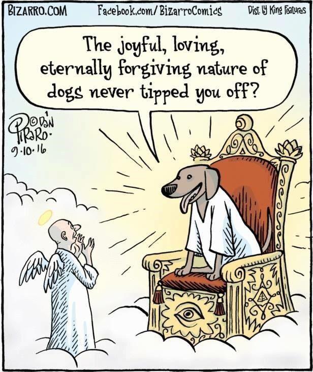 Dog S Are Heaven Dog Comics Bizarro Comic Comics Kingdom