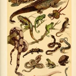 of Wild Animals, Insects, and Marine Life from Antique Childrens Science Book