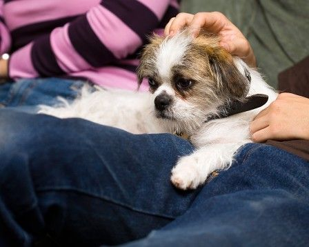 Getting an emotional support dog letter of prescription is no more a ...