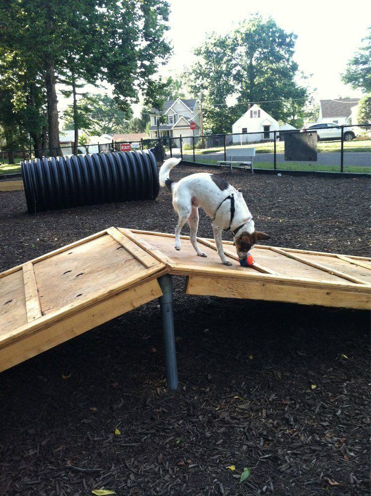 Runnemede Dog Park Runnemede Nj Dog Park Outdoor Dogs