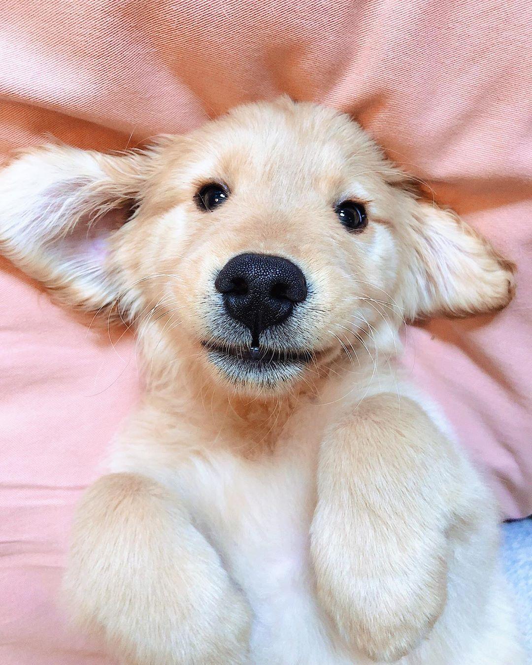 Teddy bear puppies wausau wi