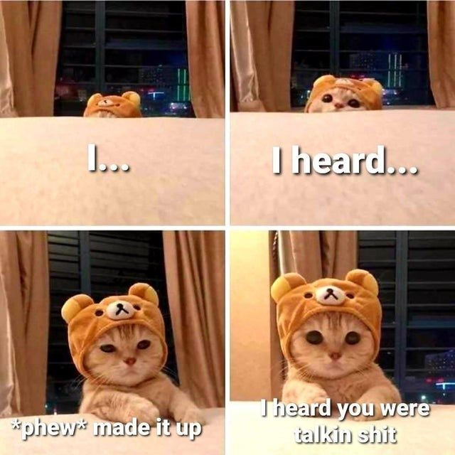 Cat Medley: Funnies, Cuteness Galore, Mourning And