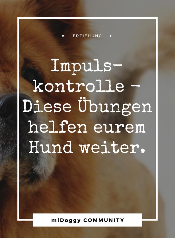 Hier bekommt ihr die Anleitungen. || Hund || Tipps || Ideen ||