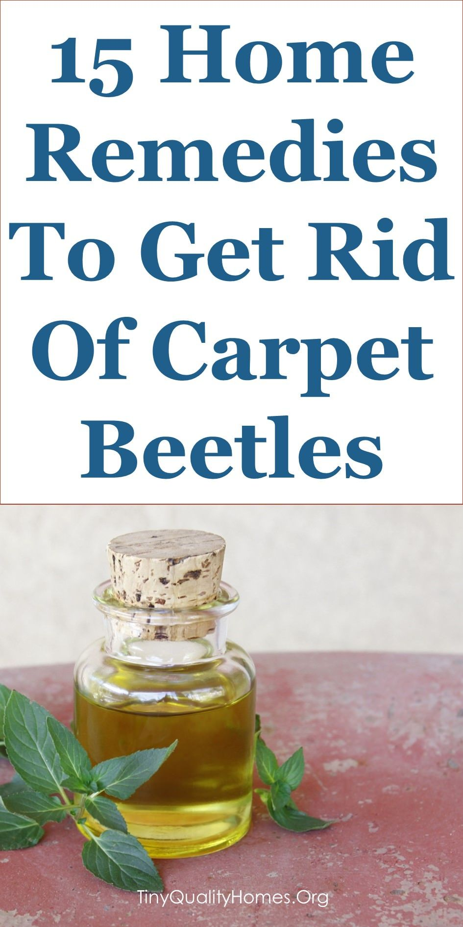 15 Quality Home Remedies To Get Rid Of Carpet Beetles