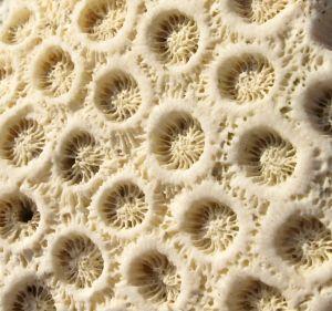 Coral close-ups 2