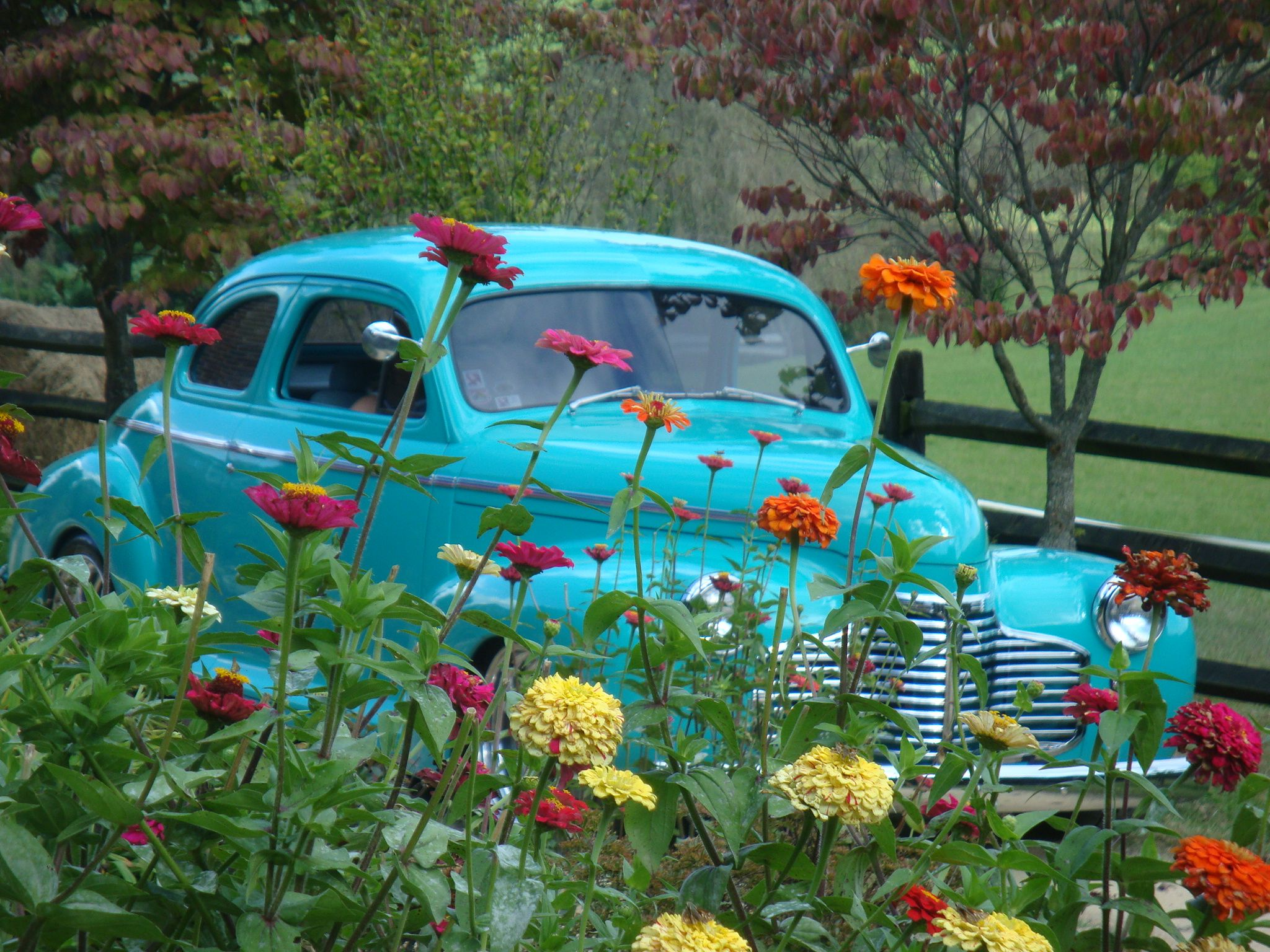 Classic cars make a bright statement for entrances and exits.  Taken at Storybrook Farm in Jonesborough, TN.