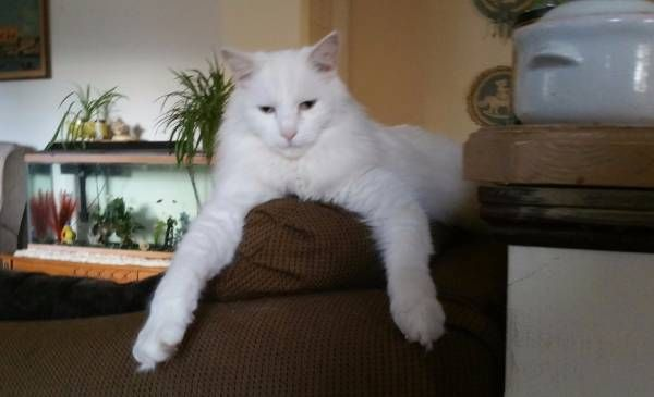Lost Great White Hunter Cotton Southington Hide This Posting